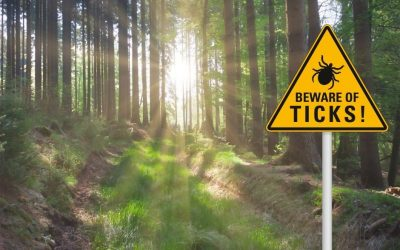 8 Steps to Protect Yourself from Tick Bites and Lyme Disease this Summer